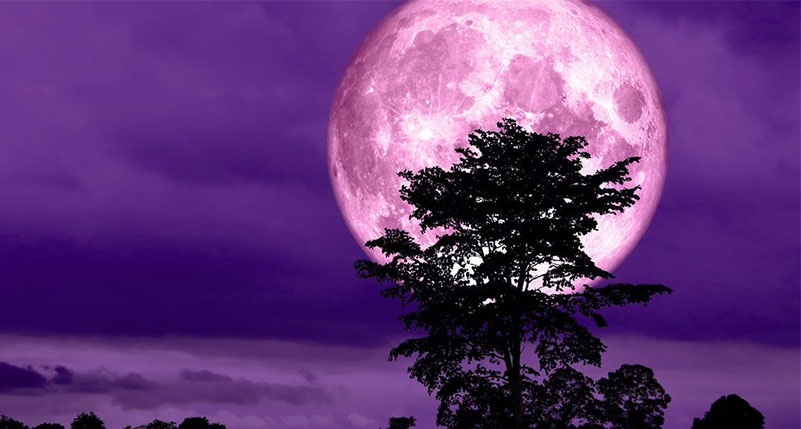 Photographers, get your cameras ready! Super Pink Moon is coming soon!